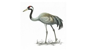 Crane is the ancient symbol for longevity because of its exceptionally long life span. In many legends, the spirits ride on cranes.