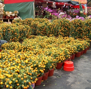 Chinese New Year flower market (年宵花市塲)