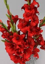 gladiolus (劍蘭) brings joy and career advancement