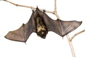 "Hanging bat (蝙蝠 (bian fu) which is homophonic with 變福 which means ""becoming prosperous"" or ""turning into blessings""."