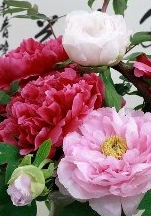 Peonies (牡丹花) are symbols of wealth, prosperity and peace