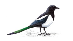 Magpipe (喜雀) symbol translates into the bird of joy. It is believed that when the Magpie nests in your house, it brings much cause for celebration and many happy occasions.
