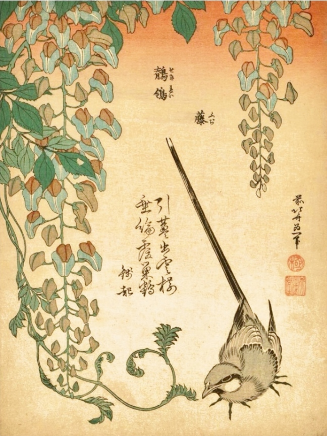 Katsushika Hokusai (葛飾 北斎) (c1760 - 1849), Wagtail and Wisteria (from' Small Flowers')