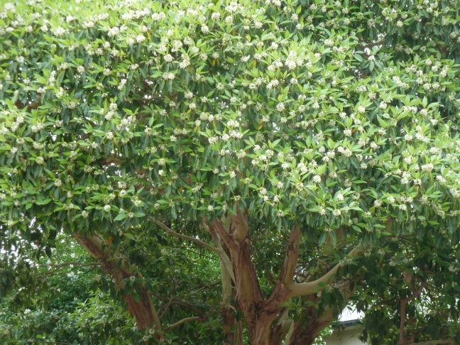 A close up photo of the above tree