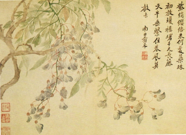 Yùn Nántián (惲南田) (1633-1690) Wisteria flowers, ink and Chinese watercolour on paper