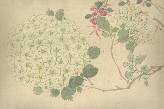 Zhou Zhimian (周之冕) (b 1520), a small section of a long scroll of flower painting (百卉圖), ink and Chinese watercolour on paper, 32 x 171.7 cm