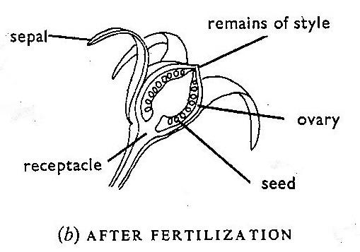 From Mackean, D.G (1978) Introduction to Biology, John Murray