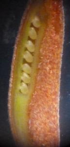 P1430299 (614x1280)
