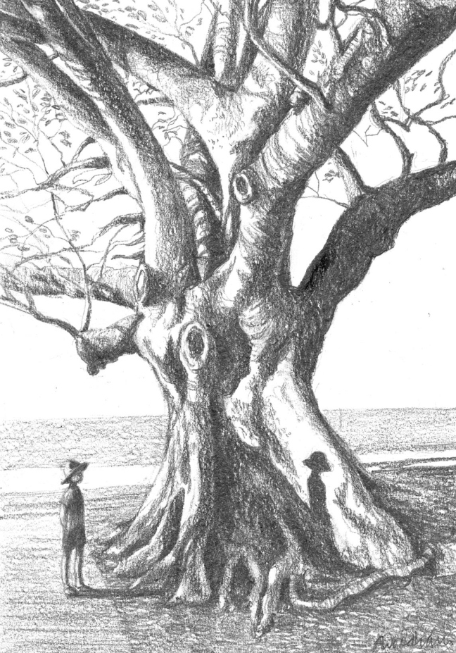 Anne Woodham 'The Shadow on The Big Tree'. Graphite on paper, 20.5 x 15 cm